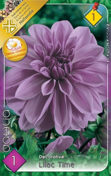DAHLIA gigan.Lilac Time 1ks