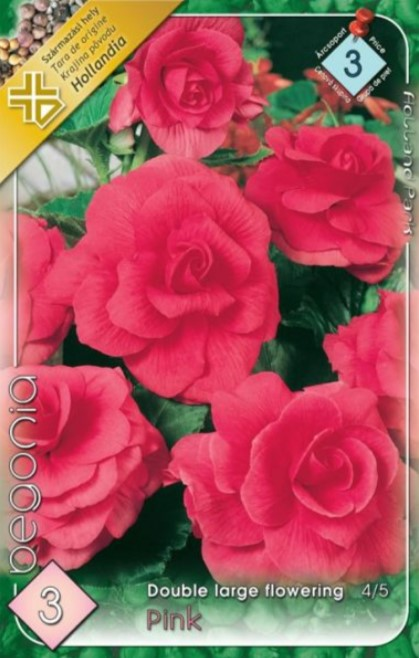 BEGONIA double large pink  3ks