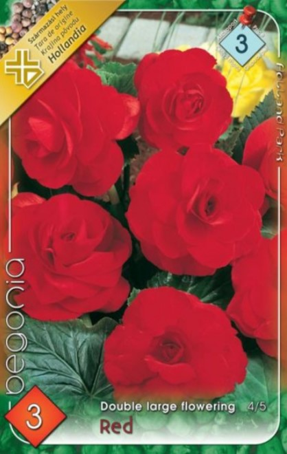 BEGONIA double large red 3ks