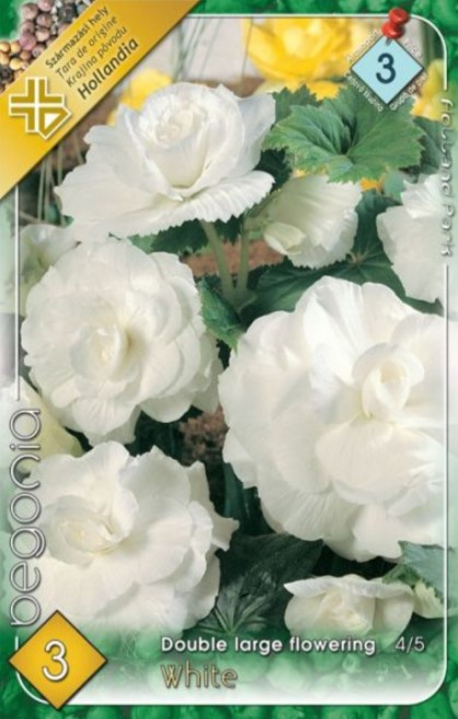 BEGONIA double large white 3ks