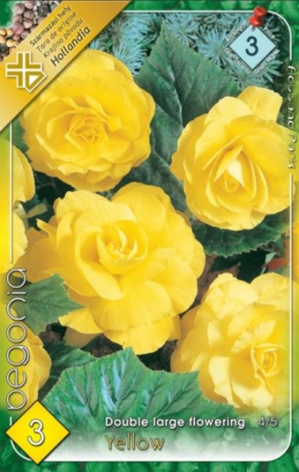 BEGONIA double large Yellow 3ks