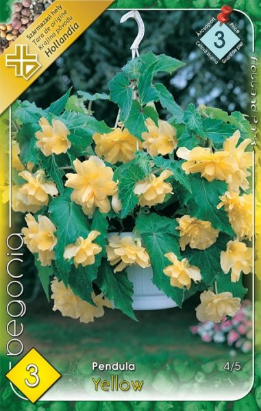 BEGONIA Pendula Yellow 3ks