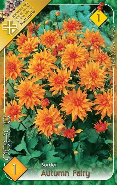 DAHLIA BORDER Autumn Fairy 1ks