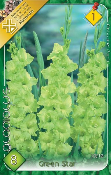 GLADIOL Green Star    8ks